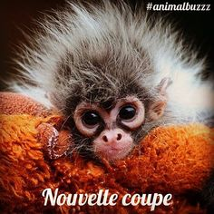 Hey bonjour ! #coiffeur #weekend #singe #animalbuzzz