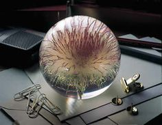 Open Thistle Paperweight