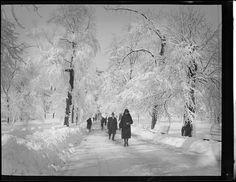 Blizzard in Boston , via Flickr