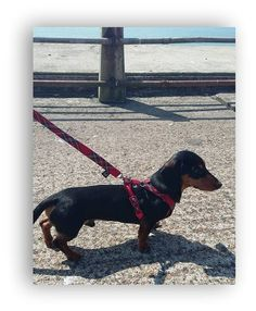 Harnesses - Red Tartan Harness and Lead