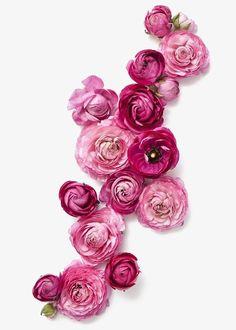 Rosas rojas, Rose, Rojo, Flores Imagen PNG
