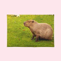 #Capybara #Place #Mats