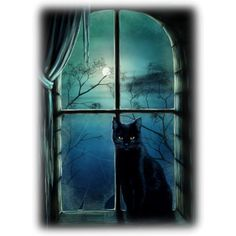 Blog de l'ile de kahlan - ❤ liked on Polyvore featuring backgrounds, halloween, cats, windows and animals