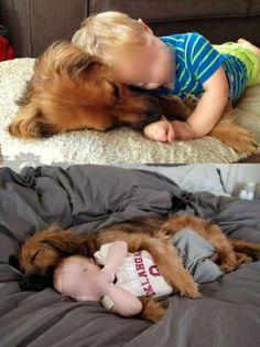 L'amicizia di un animale non conosce limiti, le immagini che toccano il cuore
