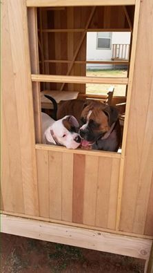 Harley and Zoey playing in the Play House