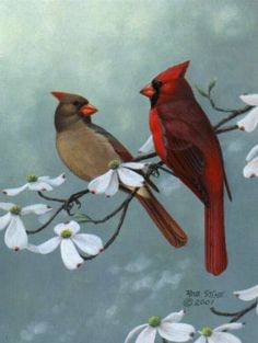 NC State bird: Cardinal. Pic shows male and female cardinals. Look to watch