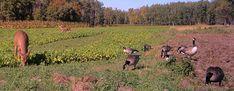 Kip's Korner: Food Plots Aren't Just for Deer | Quality Deer Management Association