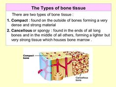 Image result for two types of bone cancellous tissue slide