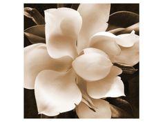 Magnolia Close Up by Christine Zalewski