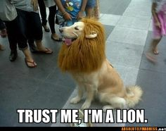 Trust me i'm a lion...this is so what i want for stella!