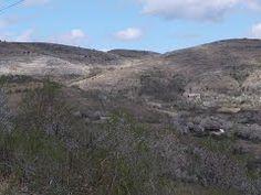 Panoramio - Photo of Tohani by www.unuacolo.blogspot.com