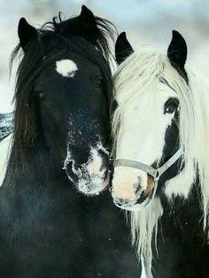 Lovely pair ❤