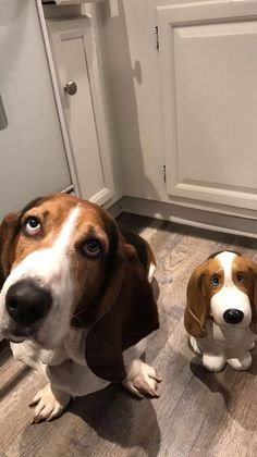 My dog and his cookie jar look-alike http://ift.tt/2rKh2Je
