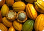 Cacao stabilizes blood sugar