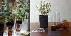 Vasi auto-innaffianti dalle bottiglie di #vetro
