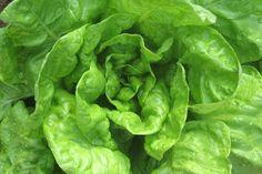 salada de alface - Google Search