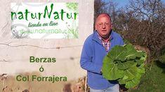 Cultivo de Berzas ó Col forrajera (huerto facil )