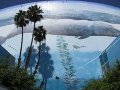 Long Beach, CA whaling wall by Wyland...it's awesome!!!!!
