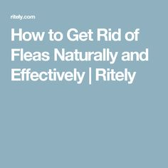 How to Get Rid of Fleas Naturally and Effectively   Ritely
