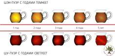 Пуэр старый или молодой? Что лучше? | Институт чая Пуэр | Чай Пуэр — популяризация и изучение, создание чайного стиля жизни
