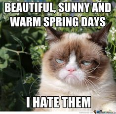 Grumpy Cat And The Spring by recyclebin - A Member of the Internet's Largest Humor Community Grumpy Cat Movie, Funny Grumpy Cat Memes, Funny Cats, Funny Animals, Cute Animals, Grumpy Cats, Funny Jokes, It's Funny, Animals Beautiful