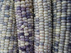 blue corn - Google Search
