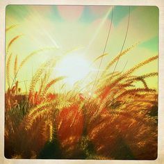 What is Scandinavian for you_Instagram competition_box with insta-photos are inspiration_on this picture: wheat field in the sun