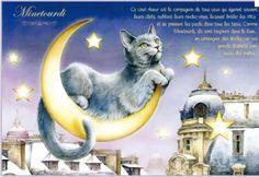 """«Minetourdi», par Séverine Pineaux. -- """"Ce chat rêveur est le compagnon de tous ceux qui égarent souvent leurs clefs, oublient leurs rendez-vous et se prennent les pieds dans tous les tapis. Comme Minetourdi, ils sont toujours dans la lune, en compagnie des étoiles car ces grands distraits sont aussi des poètes…""""."""