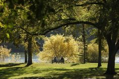 Kiwanis Memorial Park / Spadina Crescent East, Downtown Saskatoon Memorial Park, Travel Bags, Trips, Canada, Spaces, Plants, Traveling, Cemetery, Travel