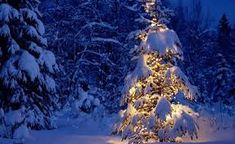 80 Winter Christmas Wallpapers Wallpapers available. Share Winter Christmas Wallpapers with your friends. Submit more Winter Christmas Wallpapers Christmas Tree Wallpaper, Christmas Desktop, Blue Christmas, Outdoor Christmas, Winter Christmas, Christmas Lights, Merry Christmas, Christmas Landscape, Christmas Canvas