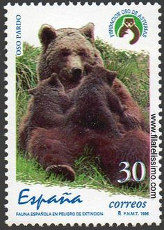 Spain - Bears on stamps, Love Stamps, Bear Art, Fauna, My Stamp, Stamp Collecting, Mail Art, Brown Bear, Postage Stamps, Science Nature