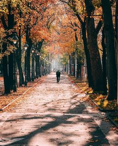 🍂 Book your classical music ticket for your fall trip to golden Vienna online. 🎵 Strauss and Mozart concerts in Kursalon and Schönbrunn Palace take place every day. Cool Places To Visit, Places To Travel, Travel Destinations, Music Tickets, Fall Vacations, Travel Around Europe, Austria Travel, European Travel, Vienna