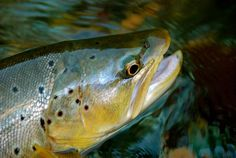 Tips for photographing your catch...this will be great for our next Cabin trip!