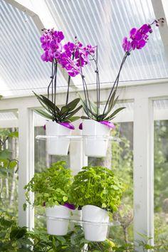 Biolan Ilo growing set. Hanging rack with pots. It is possible to place as many as three hanging racks one on top of the other. http://www.biolan.fi/suomi/puutarhaharrastajat/huonekasvituotteet/ilo-kasvatussarja