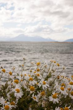 midsommar flowers