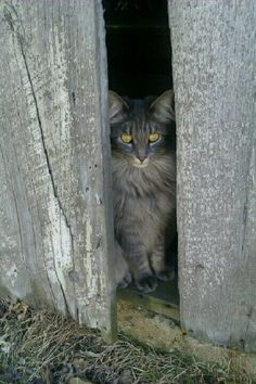 Should have been a barn cat...