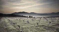 Procesiones del vino: enoturismo en Semana Santa #semanasanta