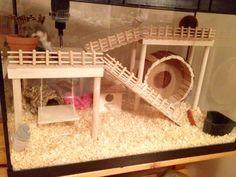 Hamster Cage - DIY aquarium conversion. Russian Campbell's Dwarf Hamster #SophieLittle