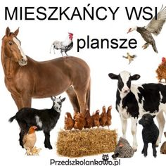 Learning Environments, Montessori, Goats, Cow, Moose Art, Mini, Animals, English Vocabulary, Animales
