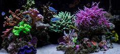 Eren Yelkenci's Nano Reef Aquarium