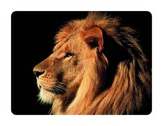 Beautiful Animal Mouse Pad Lion #3