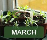 En el jardín de este mes y jardinería Ideas | Thompson & Morgan