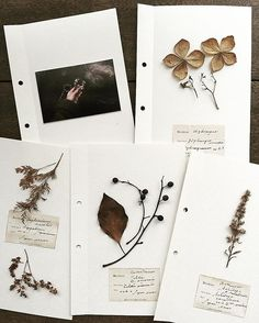 Using a sticky photo album? Botanical Art, Botanical Illustration, Field Notes, Nature Journal, Arte Floral, Dried Flowers, Stationery, Artsy, Crafts