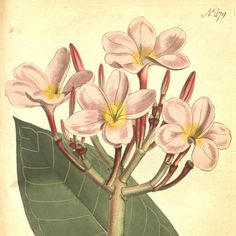 Flower print art Antique print Botanical Vintage by mapsandposters
