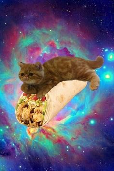1000 images about taco cat on pinterest taco cat space