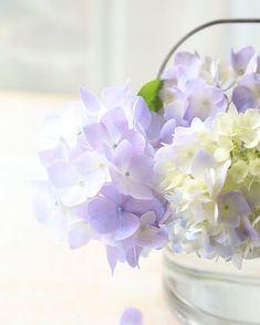 Flowers Nature, My Flower, Pretty Flowers, Purple Flowers, Flower Art, Flower Power, Beautiful Flowers Wallpapers, Flower Phone Wallpaper, Shabby Flowers