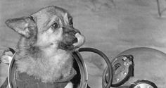 The Incredible Stories Of The First Animals In Space, In 40 Photos - http://all-that-is-interesting.com/first-animals-in-space?utm_source=Pinterest&utm_medium=social&utm_campaign=twitter_snap
