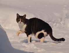 mapyu [Mori Wajin's ie-neko cat]