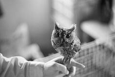 Can I have a pet owl?