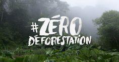 Je signe pour que V. Bolloré s'engage contre la déforestation - Menaces sur les forêts africaines : signez notre pétition à Vincent Bolloré